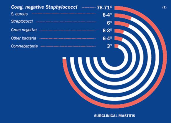 Fig 1: Veroorzakers van subklinische mastitis bij kleine herkauwers (3)